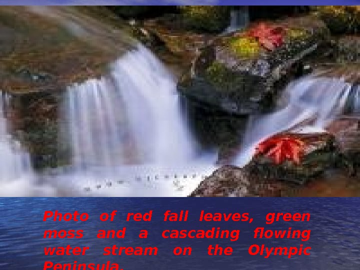 Photo of red fall leaves,  green moss and a cascading flowing water stream on the
