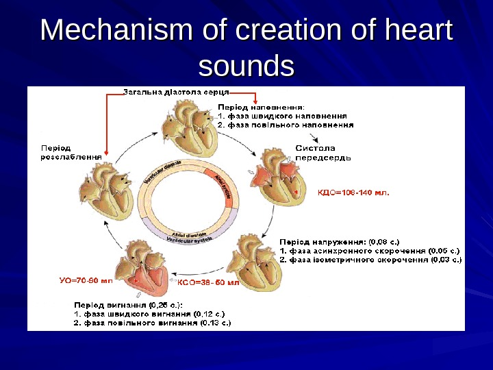 Mechanism of creation of heart sounds