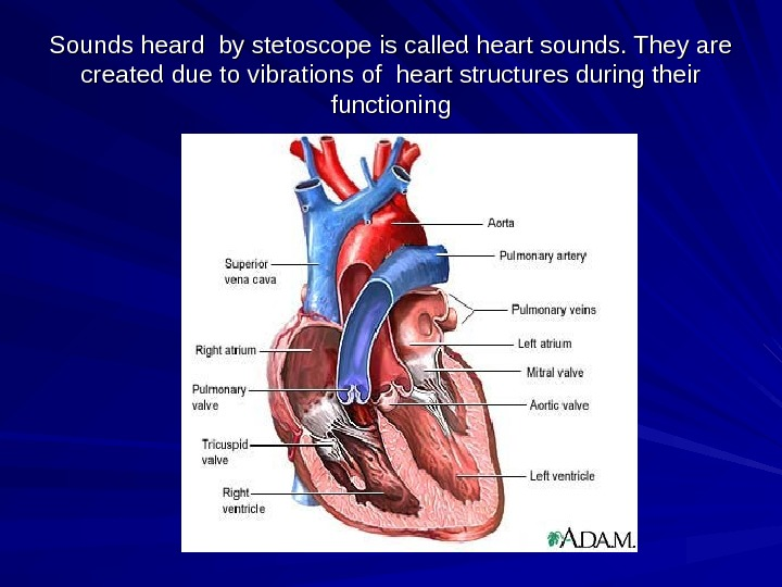 Sounds heard by stetoscope is called heart sounds. They are created due to vibrations of