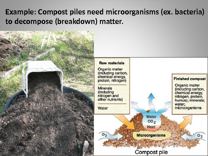 Example: Compost piles need microorganisms (ex. bacteria) to decompose (breakdown) matter.