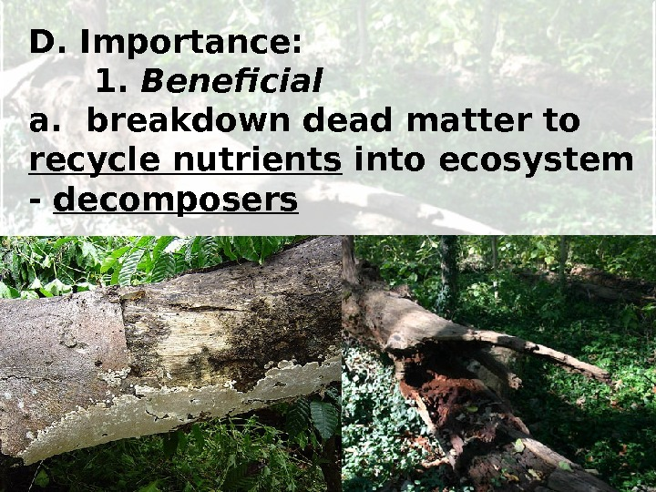 D. Importance: 1.  Beneficial a.  breakdown dead matter to recycle nutrients into ecosystem -