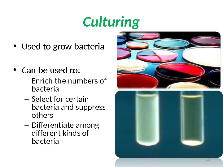 Culturing • Used to grow bacteria • Can be used to: – Enrich the numbers of