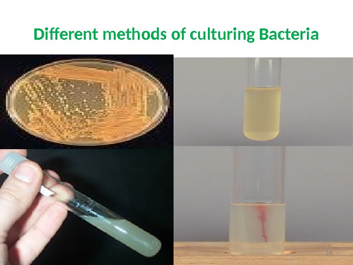 Different methods of culturing Bacteria 16
