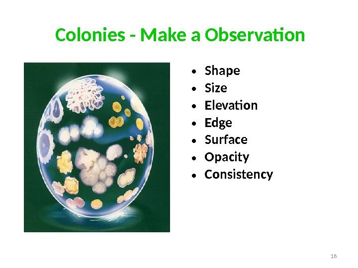 • Shape • Size • Elevation • Edge • Surface • Opacity • Consistency. Colonies