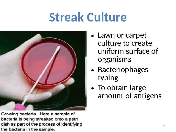 Streak Culture • Lawn or carpet culture to create uniform surface of organisms • Bacteriophages typing