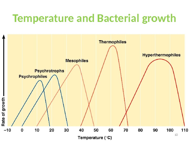 Temperature and Bacterial growth 10