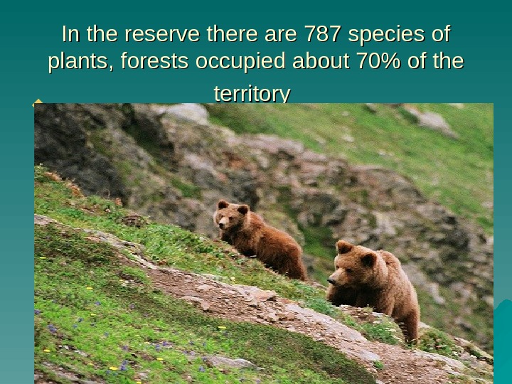 In the reserve there are 787 species of plants, forests occupied about 70 of