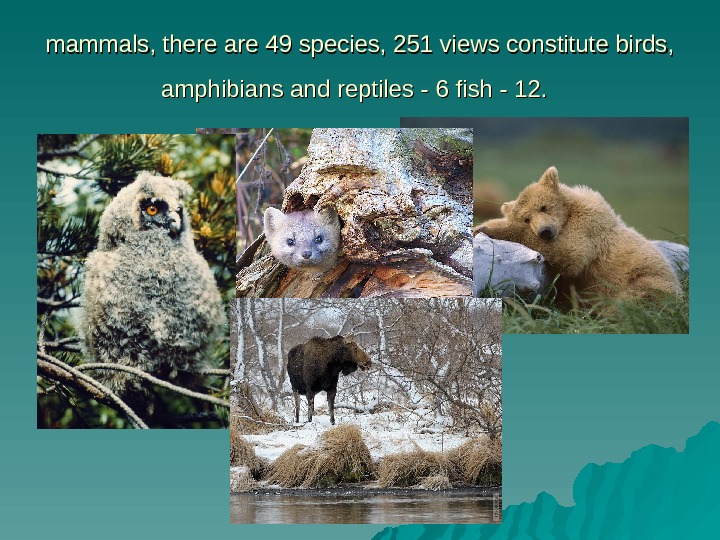 mammals, there are 49 species, 251 views constitute birds,  amphibians and reptiles -