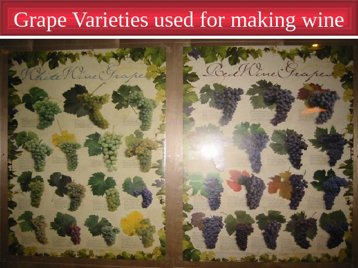 Grape Varieties used for making wine