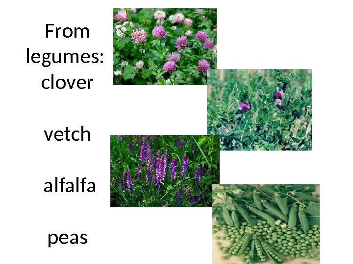 From legumes :  clover  vetch alfalfa  peas