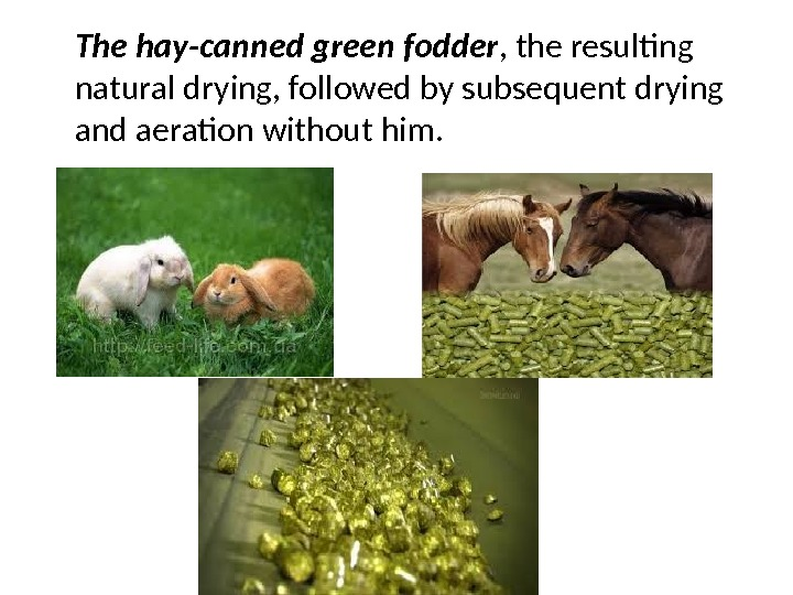 The hay-canned green fodder , the resulting natural drying, followed by subsequent drying and aeration without