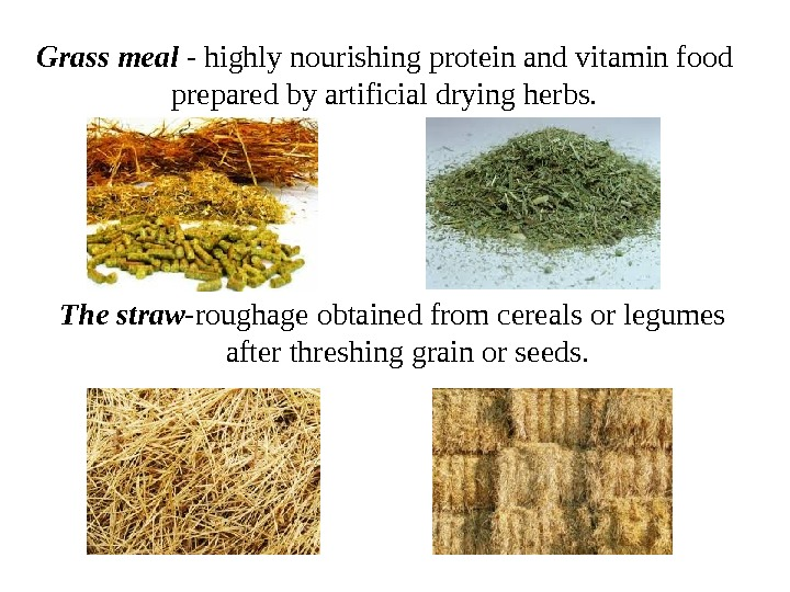 Grass meal - highly nourishing protein and vitamin food prepared by artificial drying herbs. The straw