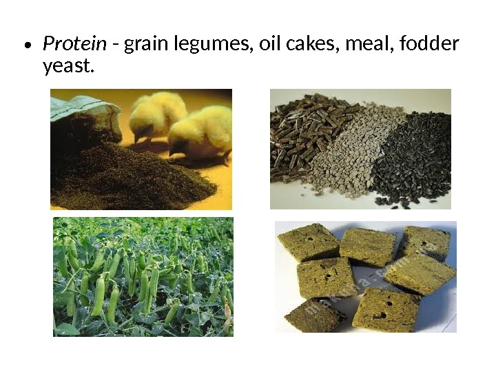 • Protein - grain legumes, oil cakes, meal, fodder yeast.