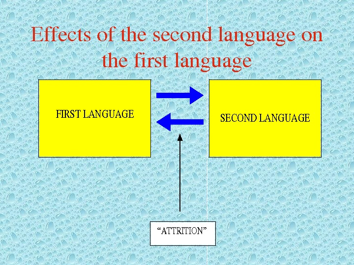 "Effectsofthesecondlanguageon thefirstlanguage. FIRSTLANGUAGESECONDLANGUAGE ""ATTRITION"""