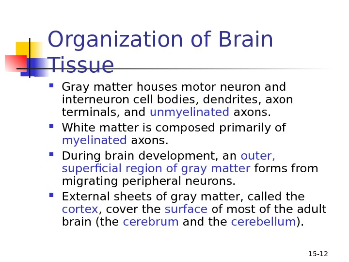 15 - 12 Organization of Brain Tissue  Gray matter houses motor neuron and interneuron cell