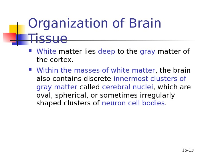 15 - 13 Organization of Brain Tissue  White matter lies deep to the gray matter