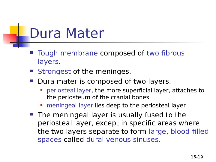 15 - 19 Dura Mater Tough membrane composed of two fibrous layers.  Strongest of the