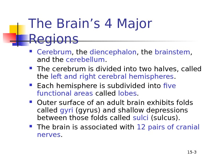 15 - 3 The Brain's 4 Major Regions Cerebrum , the diencephalon , the brainstem ,
