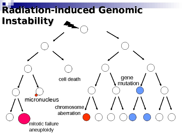 Radiation-induced Genomic Instability micronucleus chromosome   aberration cell death gene mutation mitotic failure aneuploidy