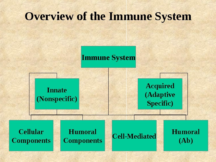 Overview of the Immune System Innate (Nonspecific) Acquired (Adaptive Specific) Cellular Components Humoral Components