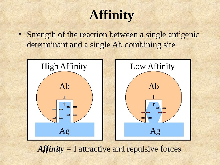 Affinity =  attractive and repulsive forces. Ab Ag. High Affinity Ab Ag. Low
