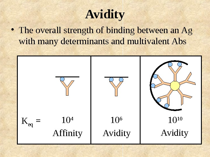 Avidity • The overall strength of binding between an Ag with many determinants and