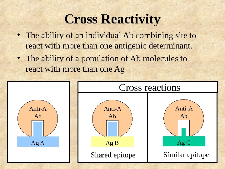Cross Reactivity • The ability of an individual Ab combining site to react with