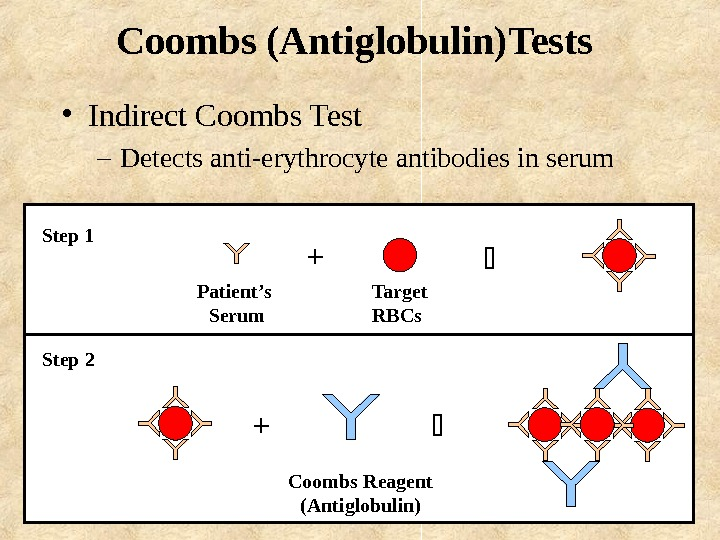 Coombs (Antiglobulin)Tests  • Indirect Coombs Test – Detects anti-erythrocyte antibodies in serum Patient's