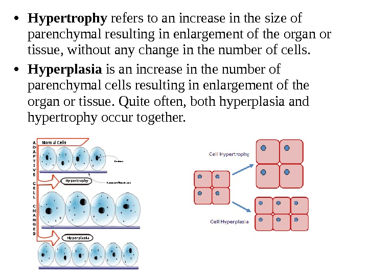 • Hypertrophy refers to an increase in the size of parenchymal resulting in enlargement of