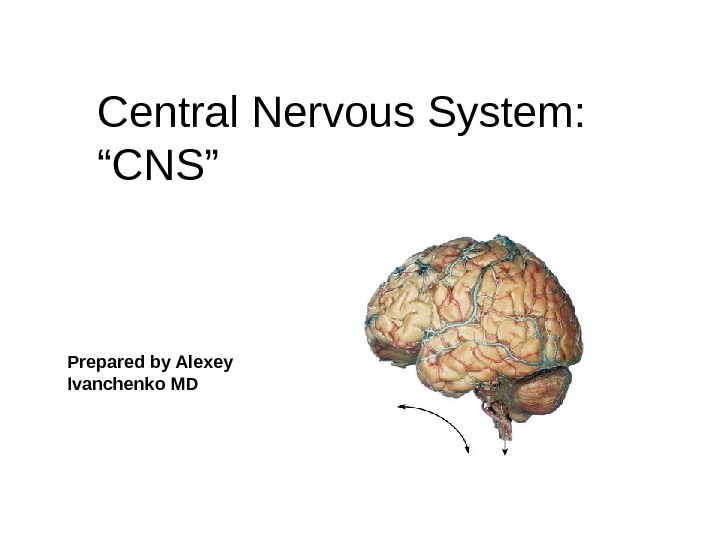 "Central Nervous System: ""CNS"" Prepared b y Alexey Ivanchenko MD"
