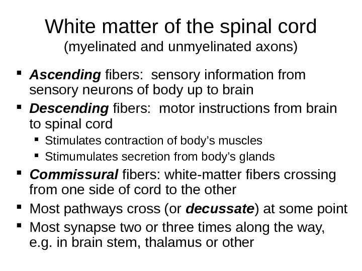 White matter of the spinal cord (myelinated and unmyelinated axons) Ascending fibers:  sensory information from