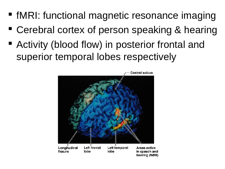 f. MRI: functional magnetic resonance imaging Cerebral cortex of person speaking & hearing Activity (blood
