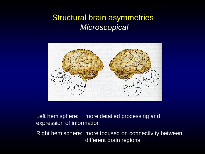 Structural brain asymmetries  Microscopical Left hemisphere:  more detailed processing and expression of