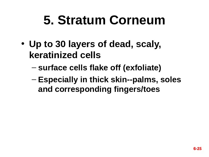 6 - 255. Stratum Corneum • Up to 30 layers of dead, scaly, keratinized cells –