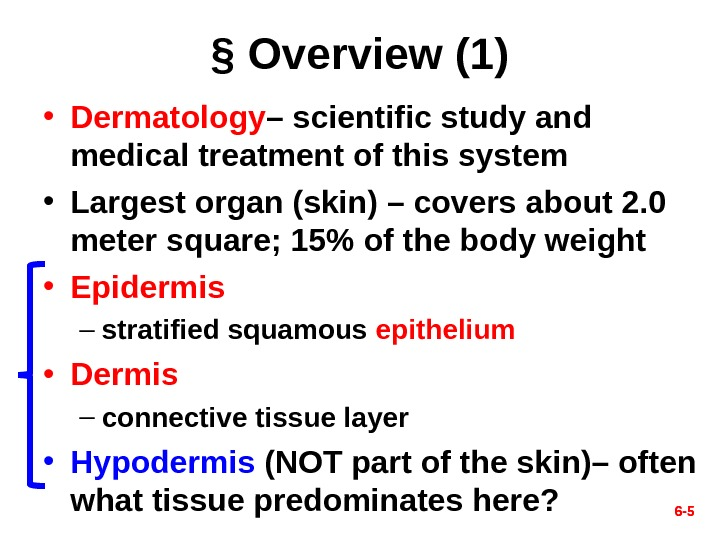 6 - 5§ Overview (1) • Dermatology – scientific study and medical treatment of this system