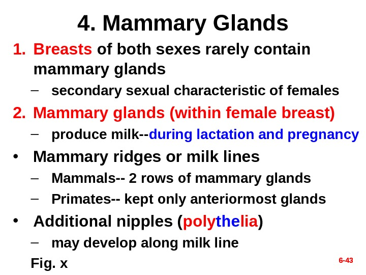 6 - 434. Mammary Glands 1. Breasts of both sexes rarely contain mammary glands – secondary