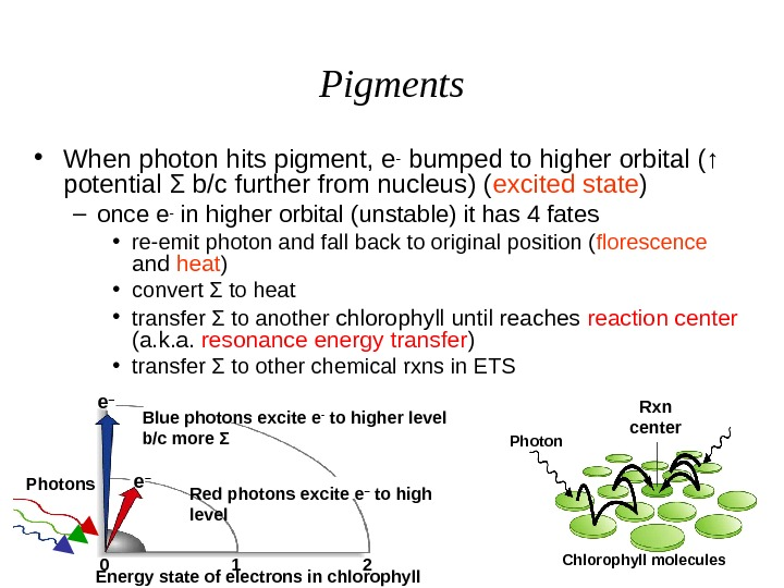 Pigments • When photon hits pigment, e- bumped to higher orbital ( ↑  potential