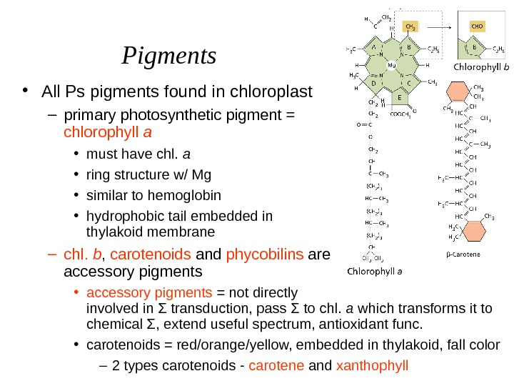 Pigments • All Ps pigments found in chloroplast – primary photosynthetic pigment =