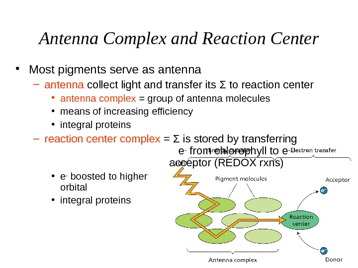 Antenna Complex and Reaction Center • Most pigments serve as antenna – antenna collect light