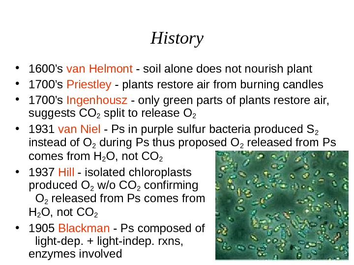 History • 1600's van Helmont - soil alone does not nourish plant • 1700's Priestley