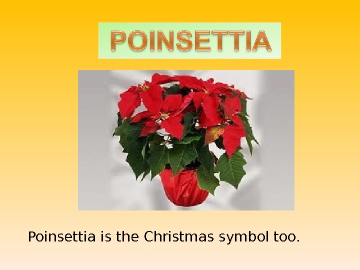 Poinsettia is the Christmas symbol too.