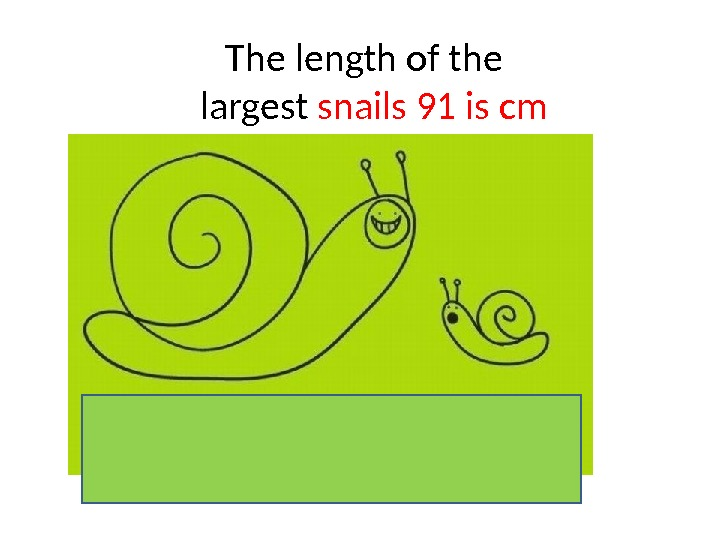The length of the  largest snails 91 is cm