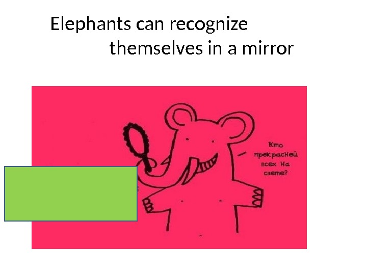 Elephants can recognize    themselves in a mirror