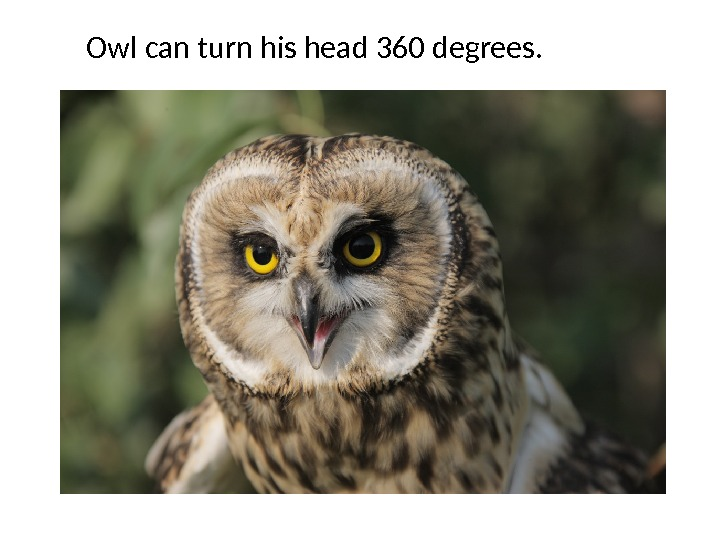 Owl can turn his head 360 degrees.
