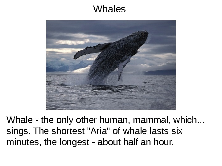 Whales Whale - the only other human, mammal, which. . .  sings. The shortest Aria