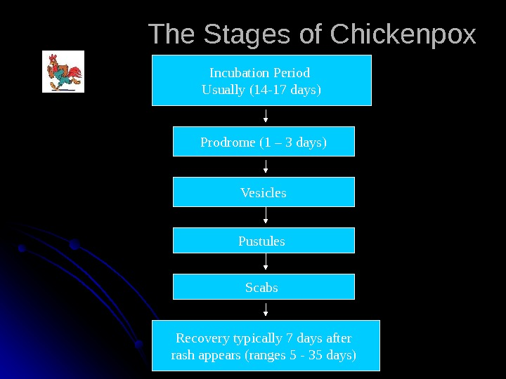 The Stages of Chickenpox Incubation Period Usually (14 -17 days) Prodrome (1 – 3