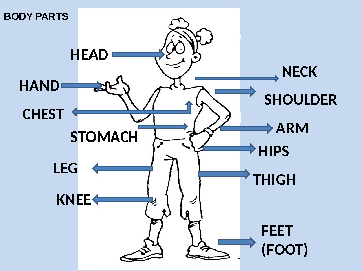 HEAD NECK SHOULDERHAND CHEST STOMACH ARM HIPS LEG KNEE THIGH FEET (FOOT)BODY PARTS