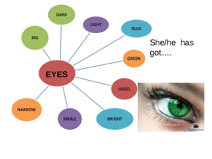 EYES She/he has got….