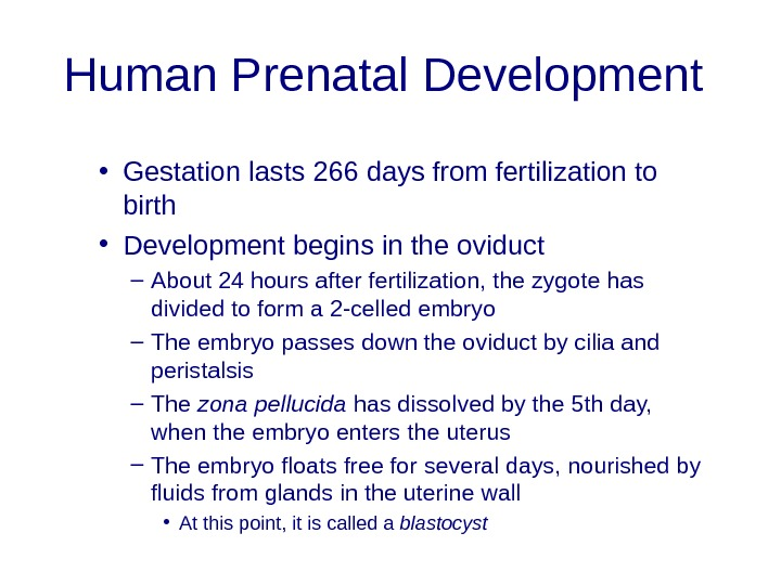 Human Prenatal Development  • Gestation lasts 266 days from fertilization to birth  • Development