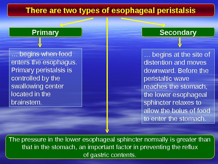 There are two types of esophageal peristalsis Primary Secondary … begins when food enters